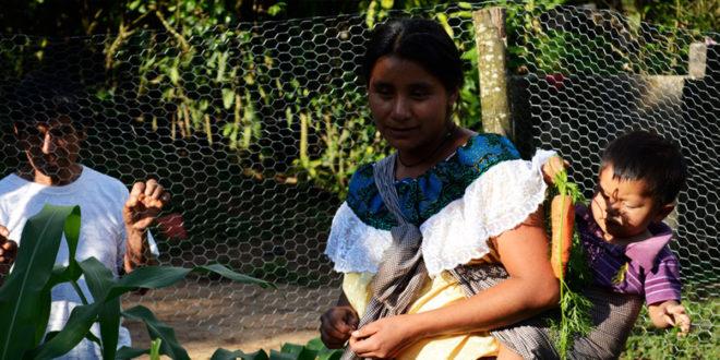 Chiapas: «Alerta de violencia de género, una resolución incompleta y limitada»